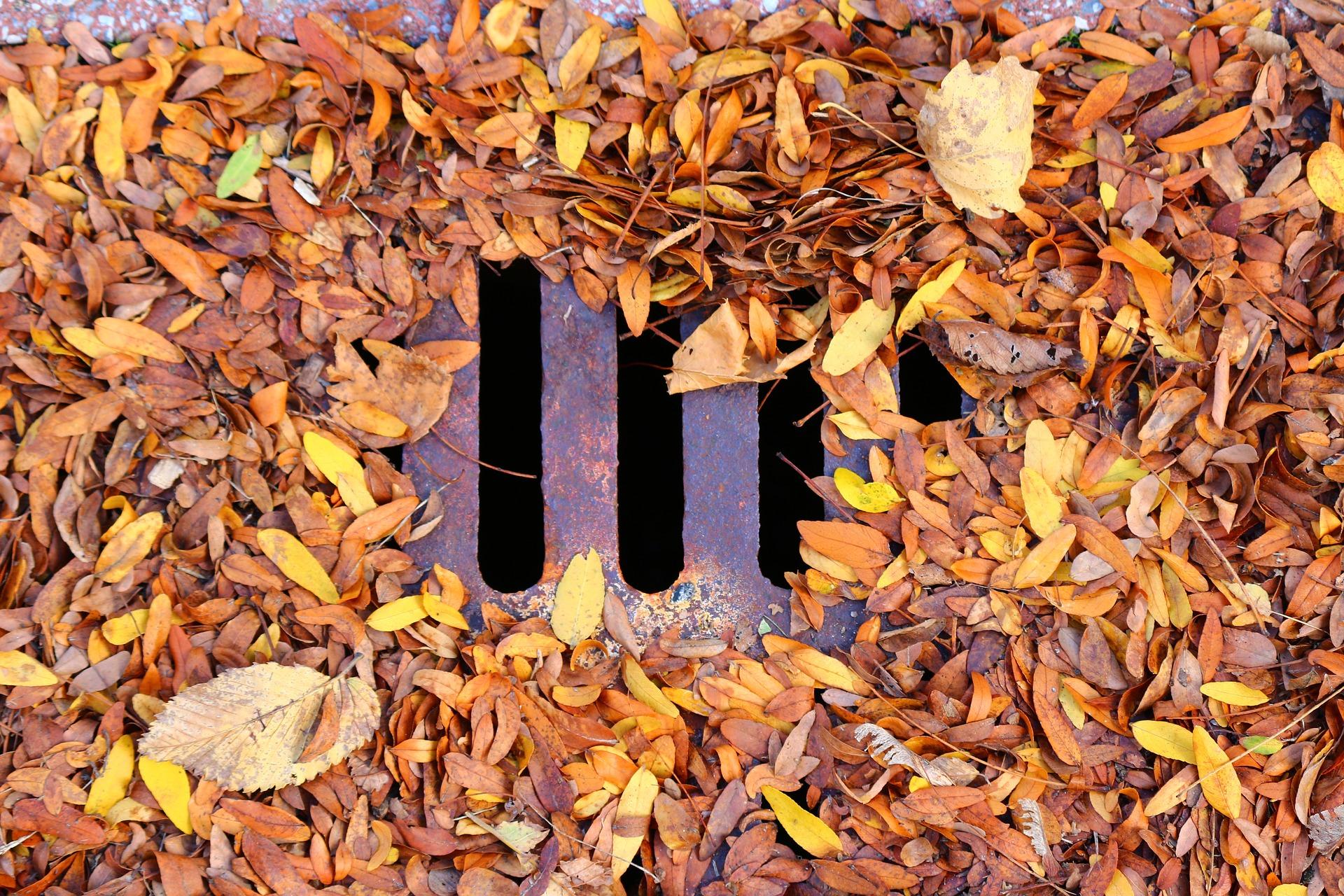 leaf-3791022_1920